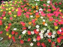 Mevsimlik ve Çok Yıllık Bitkiler